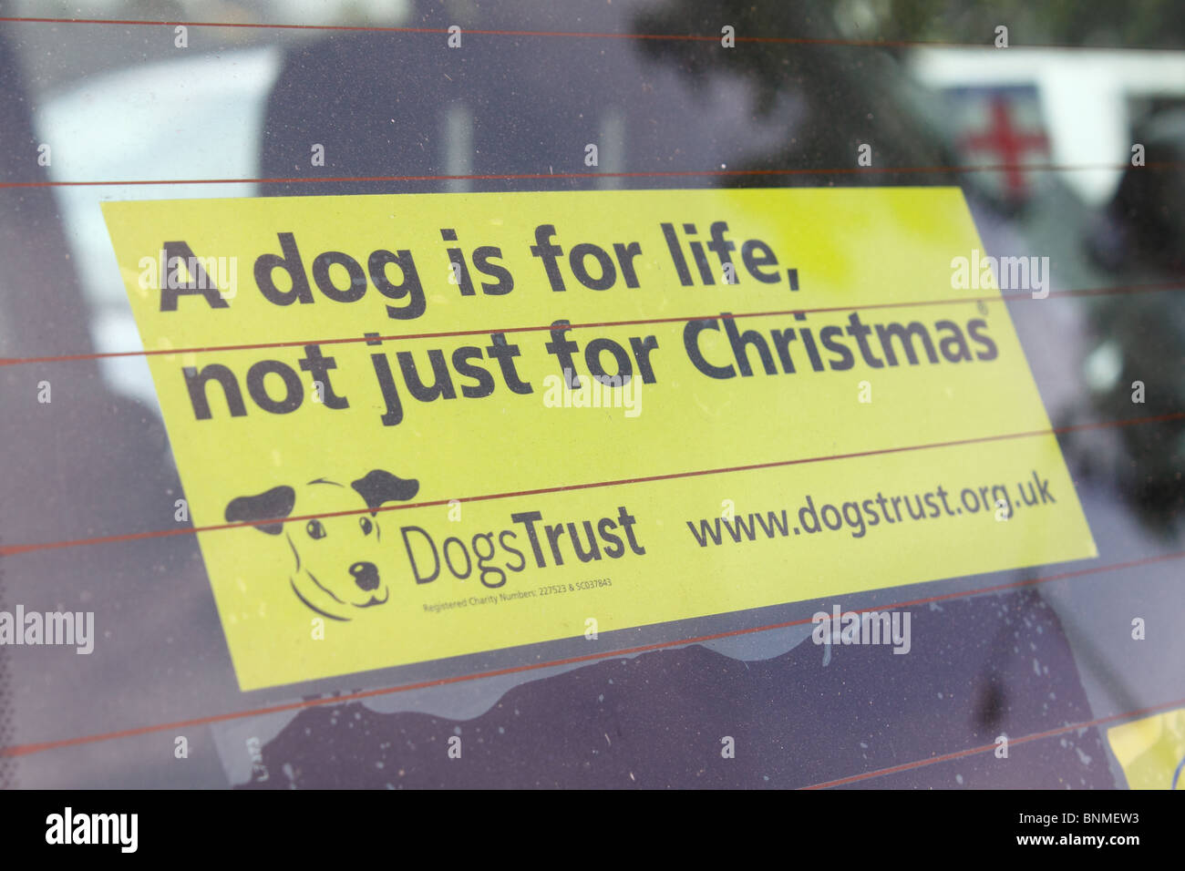'A dog is for life not, just for Christmas' sticker in car window - Stock Image