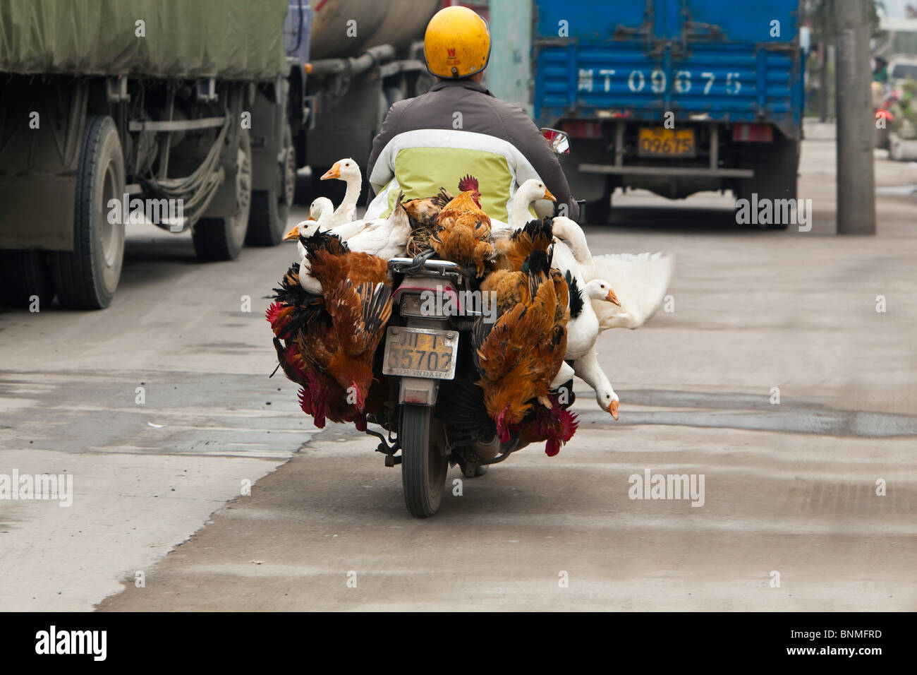 A poultry vendor on a bike in China - Stock Image