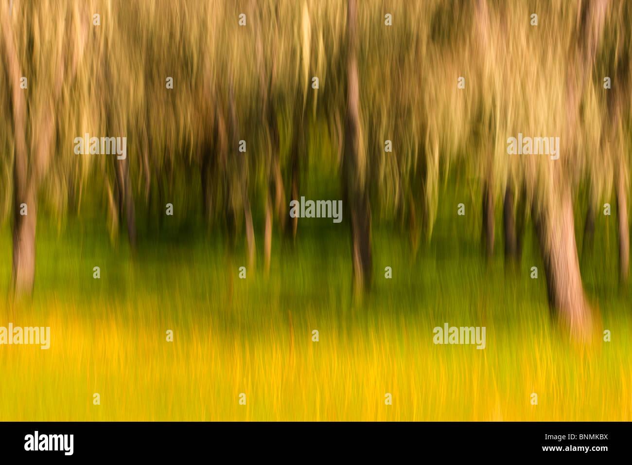 Rural California Spring scenes. - Stock Image