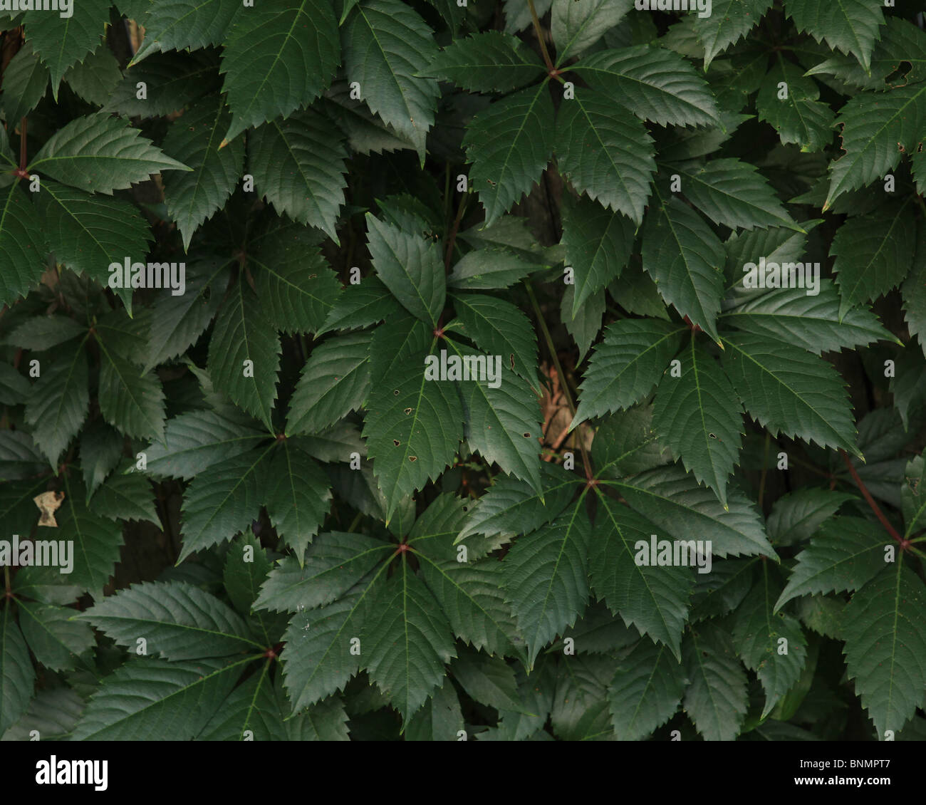 leaves - Stock Image