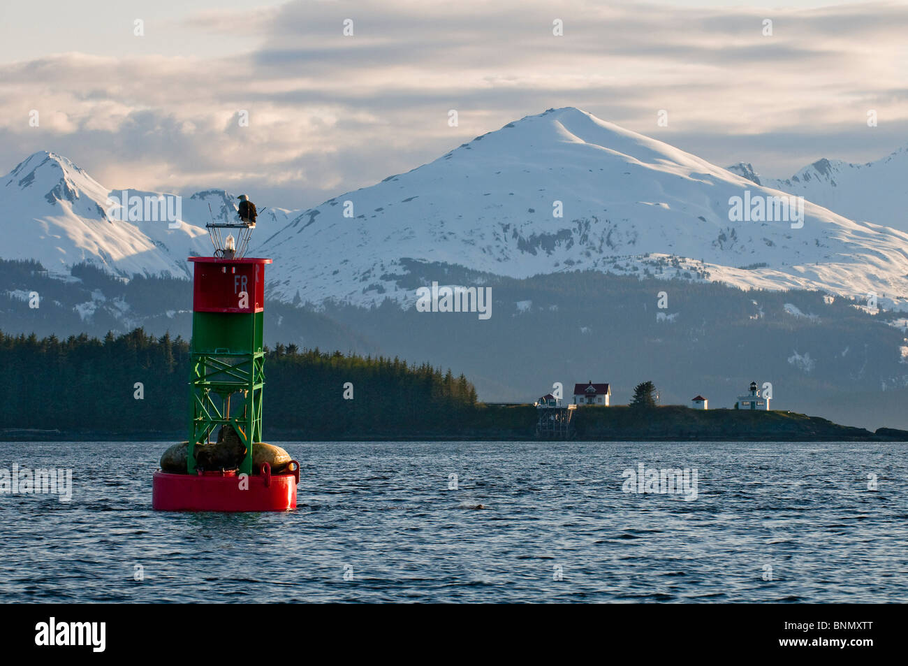 Bald eagle sits atop a buoy crowded with sea lions, Point Retreat lighthouse & Chilkat Mountain Range in the - Stock Image