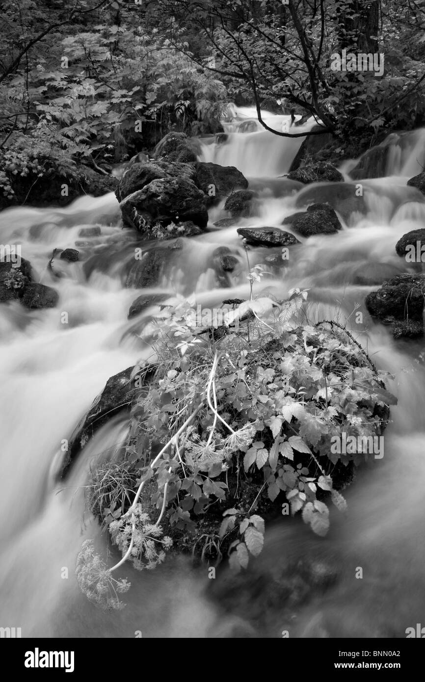 Rocks and plant life around Falls Creek in Alaska - Stock Image