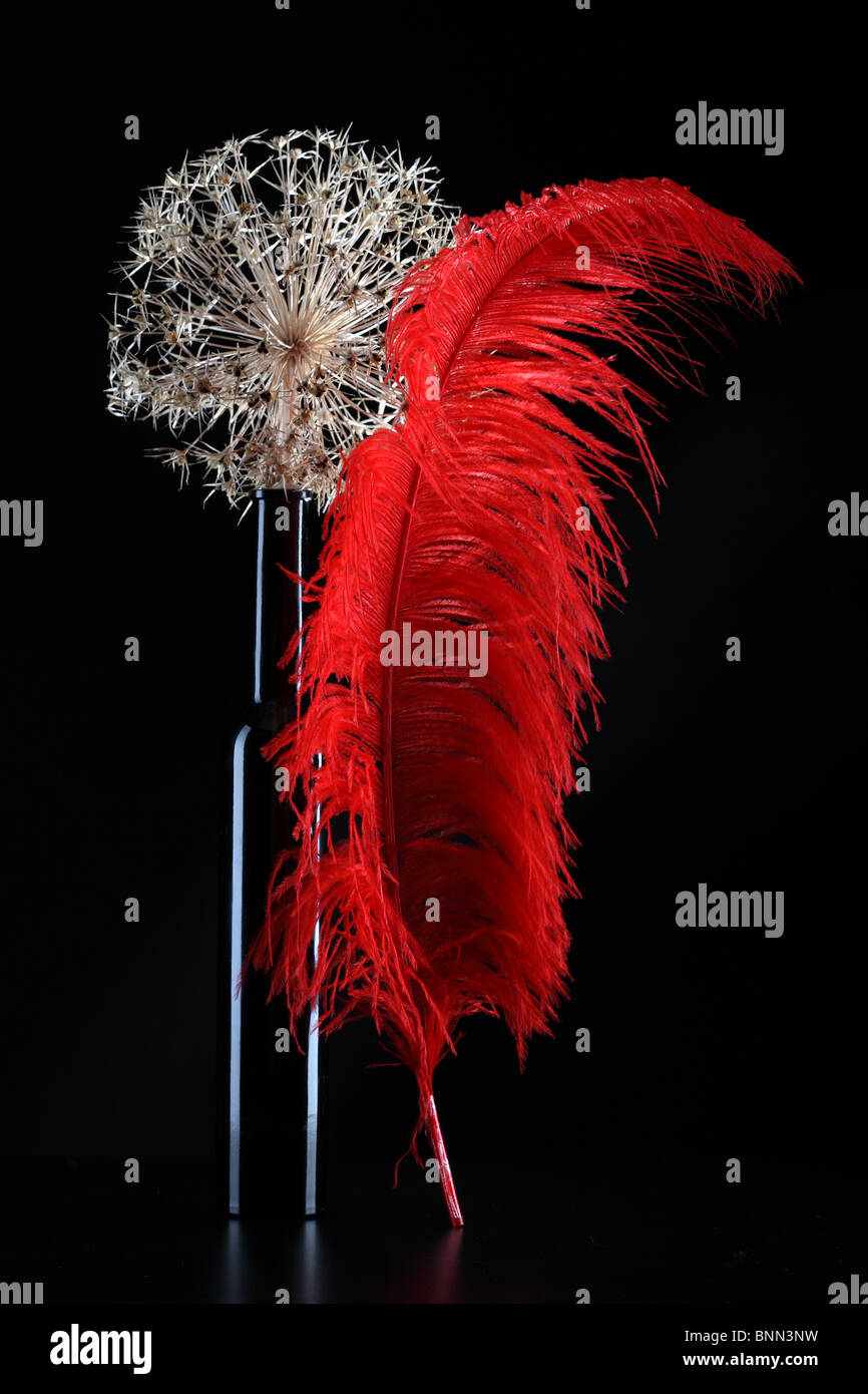 red feather dray prickle flower black vase - Stock Image