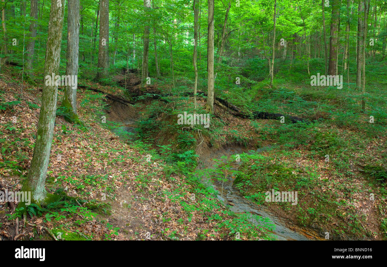 gully erosion stock photos  u0026 gully erosion stock images