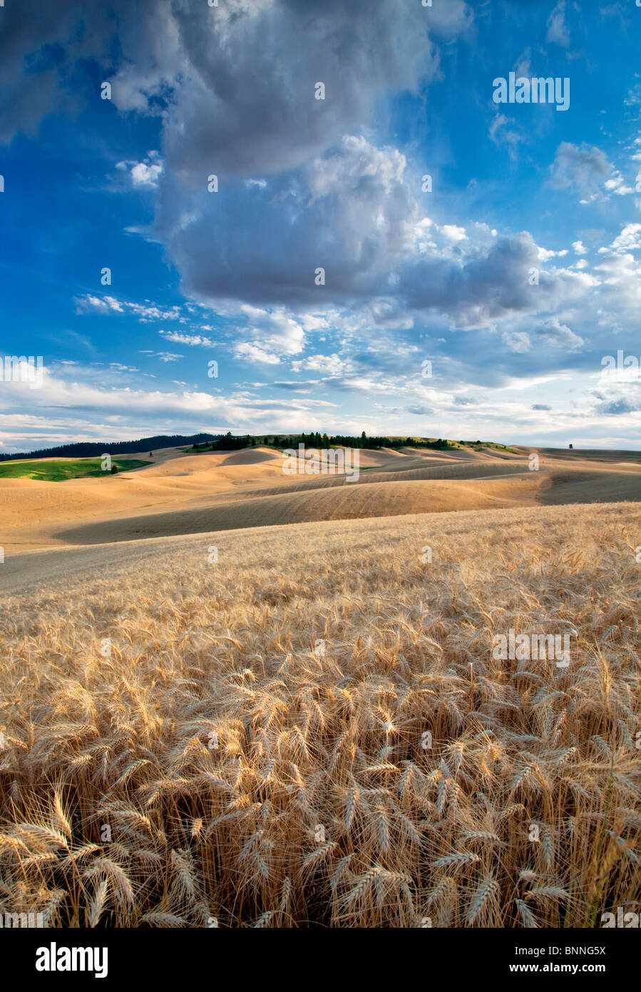 Clouds and wheat field. The Palouse, Washington Stock Photo