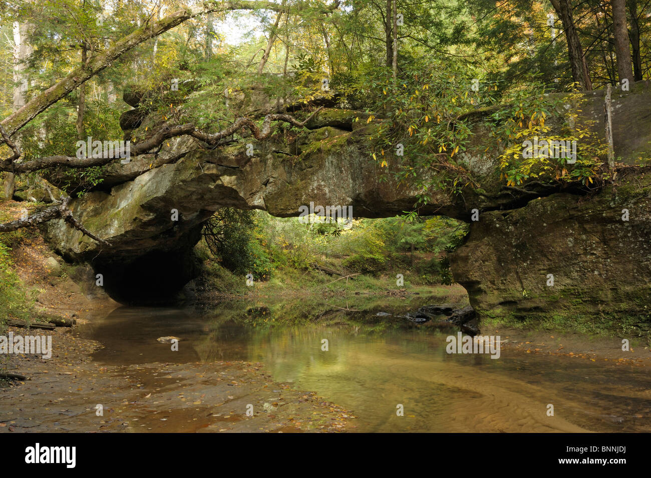 Rocky Arch Creek Arch Daniel Boone National Forest The Red River Gorge Geological Area Kentucky USA - Stock Image