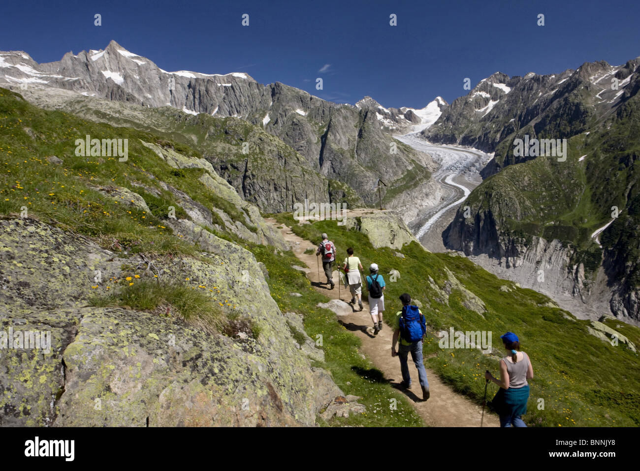 Switzerland swiss walk hike group five persons footpath scenery nature Fieschergletscher Alpine roses mountains - Stock Image