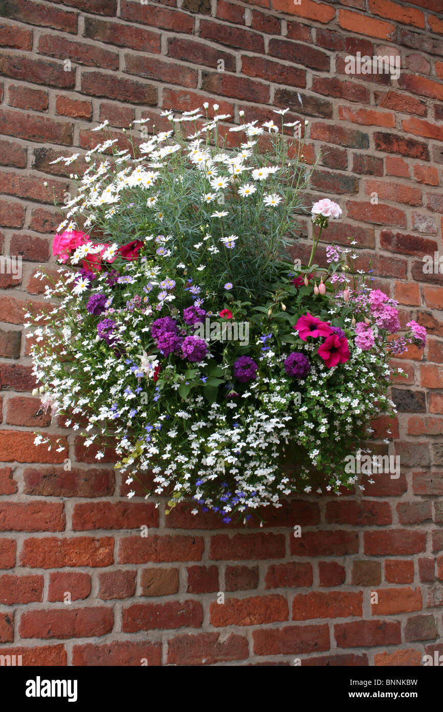 Hanging Basket On a Red Brick Wall - Stock Image