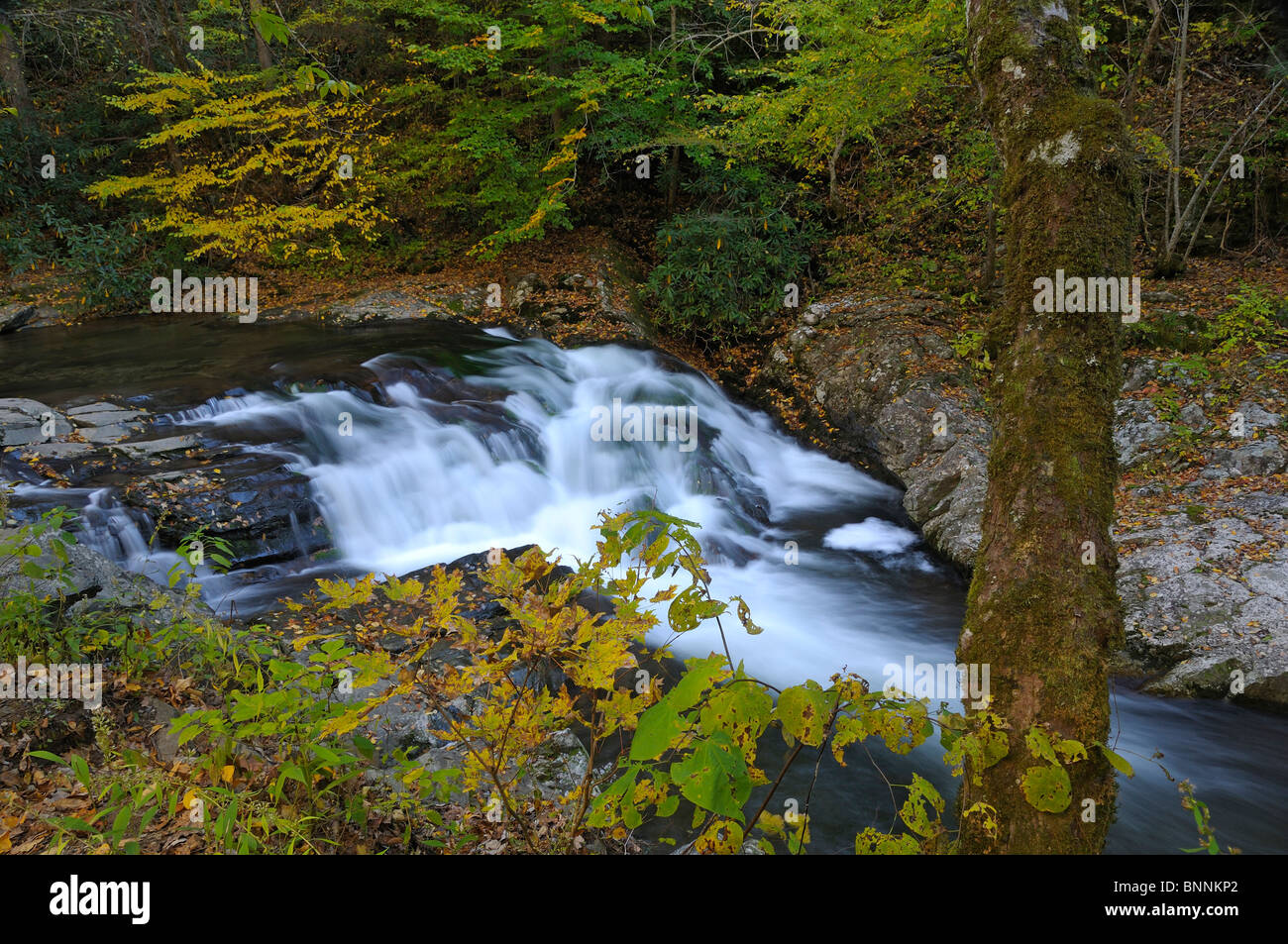 Laurel Creek Waterfall Great Smoky Mountains forest National Park Tennessee USA - Stock Image