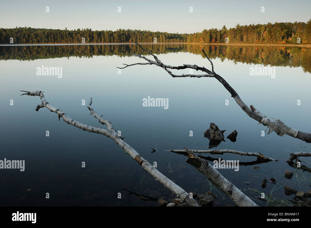 Starrett Lake Northern Highland American Legion State Forest Wisconsin USA America United States of America lake - Stock Image