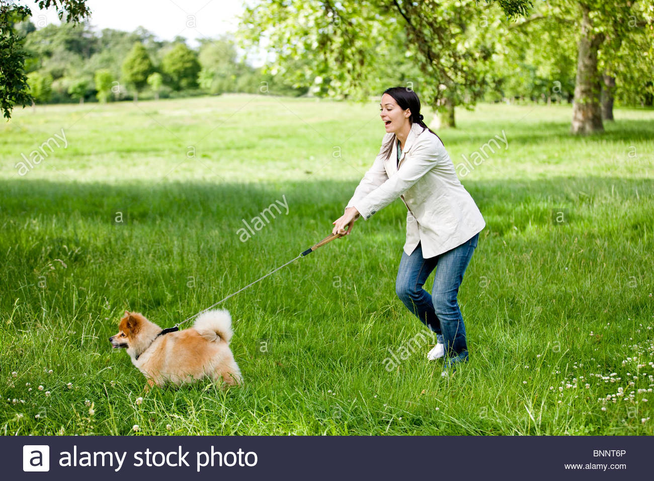 A young woman being pulled along by her dog - Stock Image