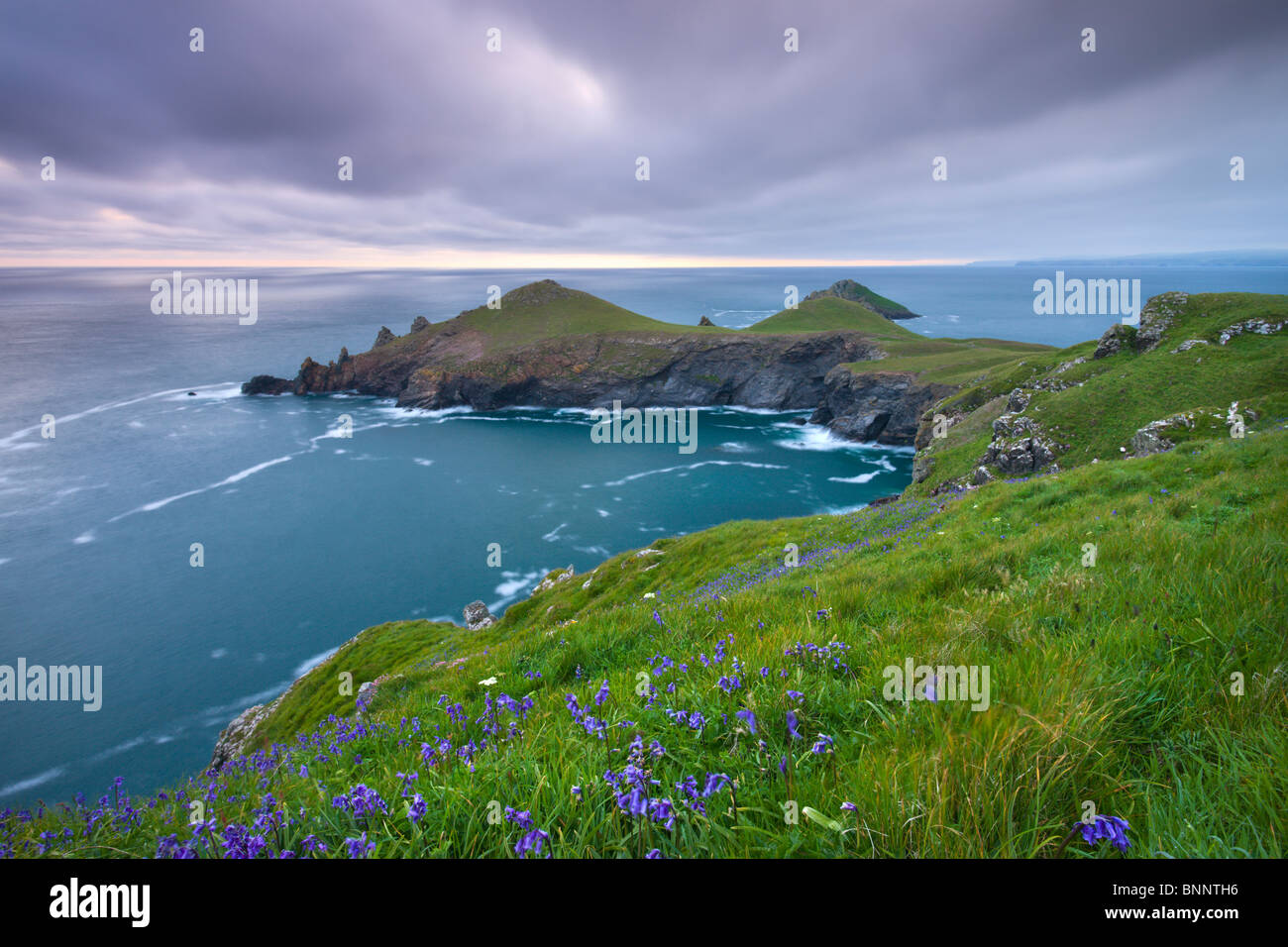 Bluebells growing on the Cornish clifftops looking towards The Rumps Peninsula, Cornwall, England. Spring (May) - Stock Image