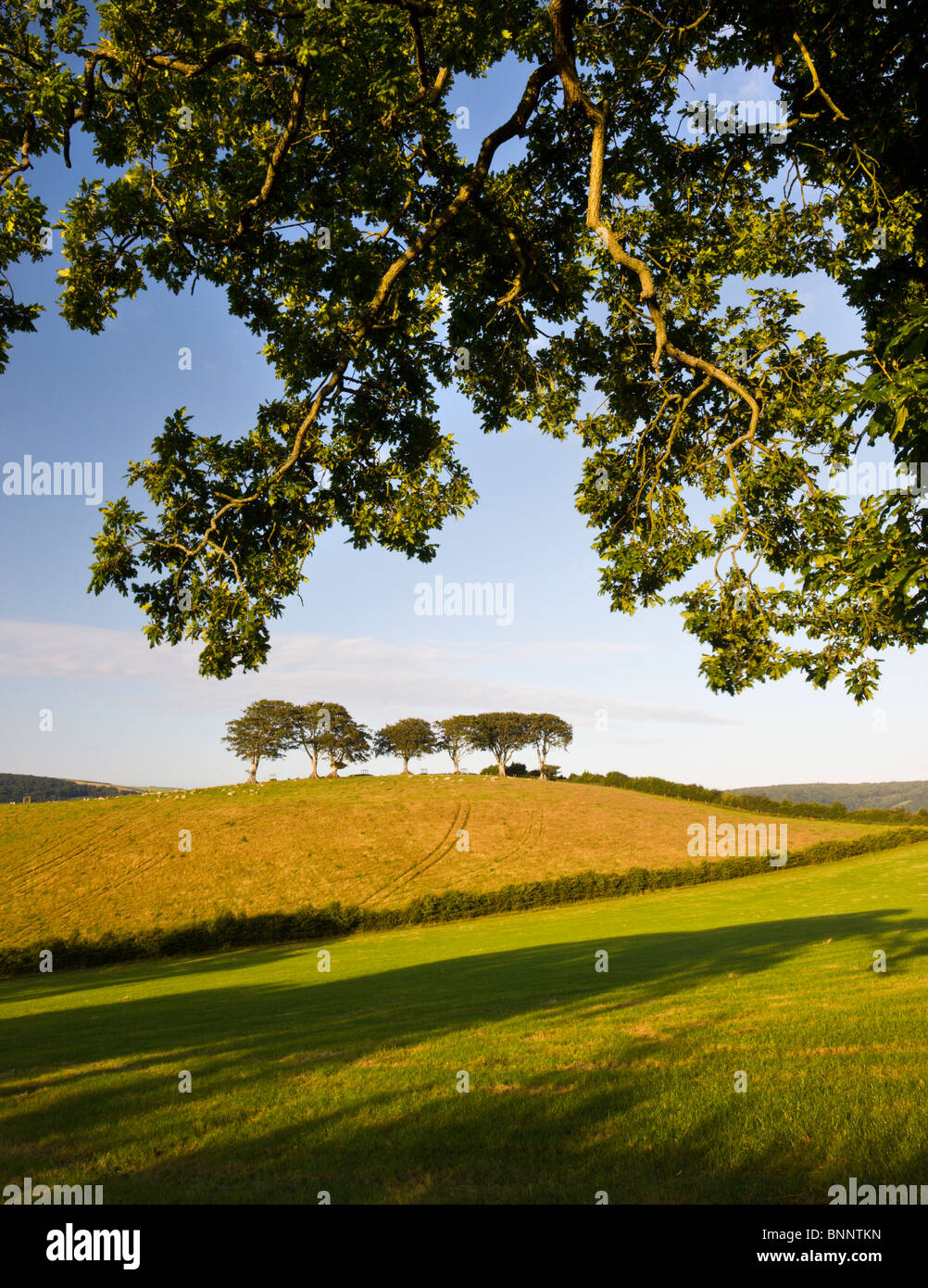 Summertime Exmoor countryside scenes between the villages of Horner and Luccombe, Exmoor National Park, Somerset, - Stock Image