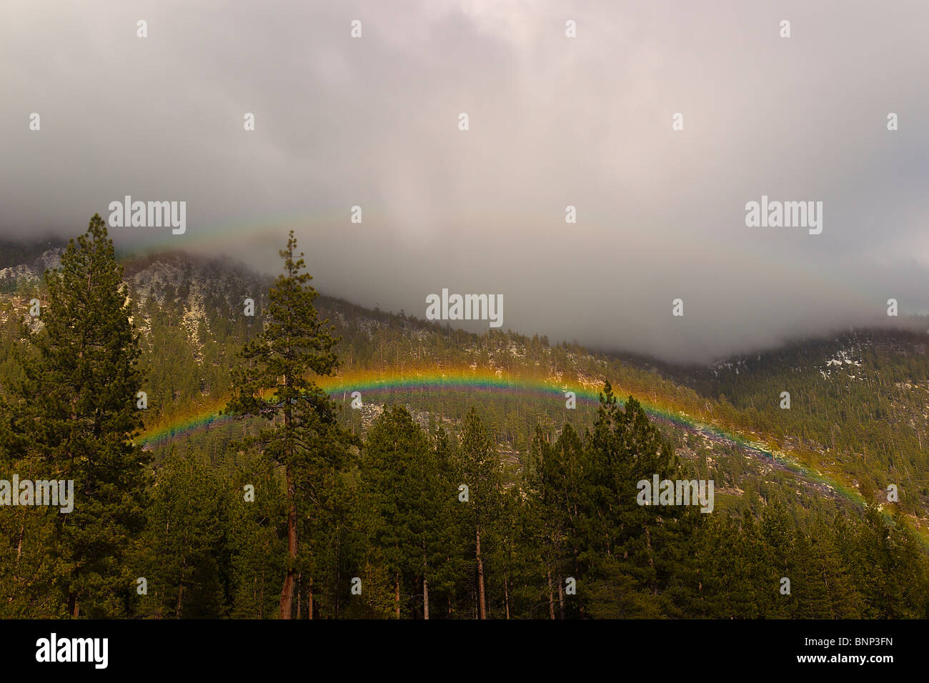 Rainbow appears over trees as rain shower passes through the north end of Lake Tahoe, Nevada, USA. - Stock Image