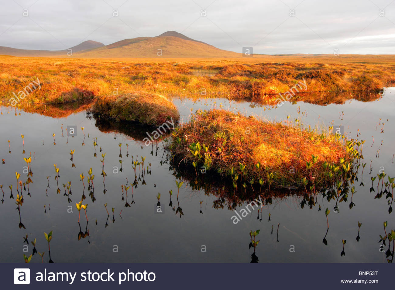 Bog Pools On Dubh Lochan Trail The Flows Forsinard RSPB Reserve Caithness Highland Scotland UK - Stock Image