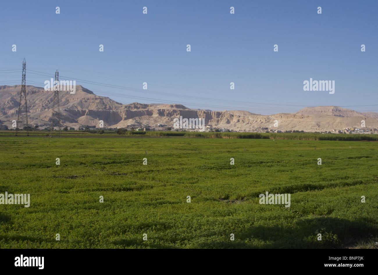 Egypt. Luxor. Agricultural area. Arid zone at the borrom. - Stock Image