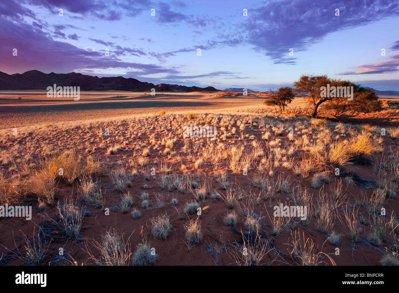 Setting sun lights up unique scenery of south-west Namib desert or pro-Namib. NamibRand Nature Reserve, Namibia Stock Photo