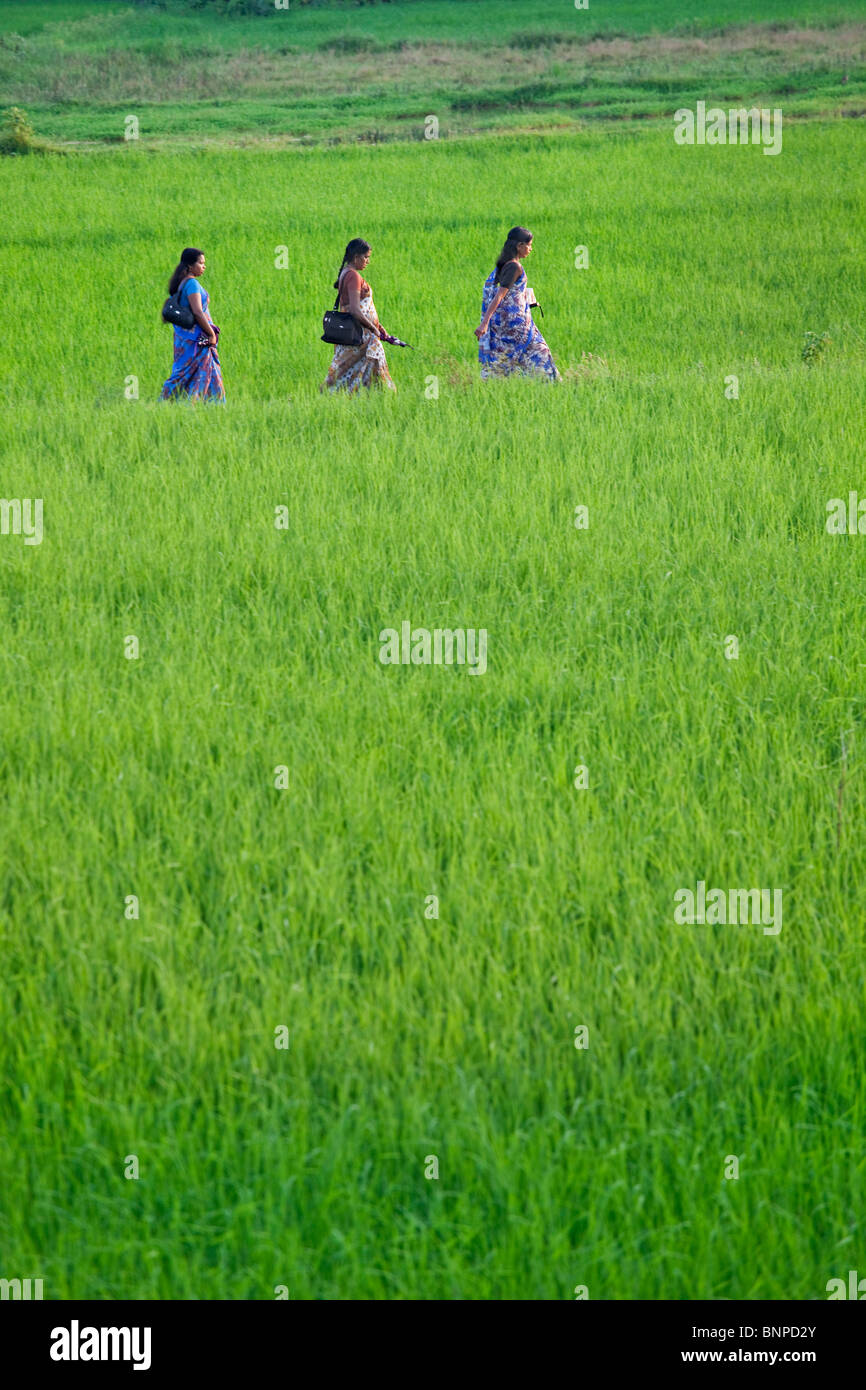 Three young indian woman wearing bright traditional sari's walking through a rice field. Theni Tamil Nadu, southern - Stock Image