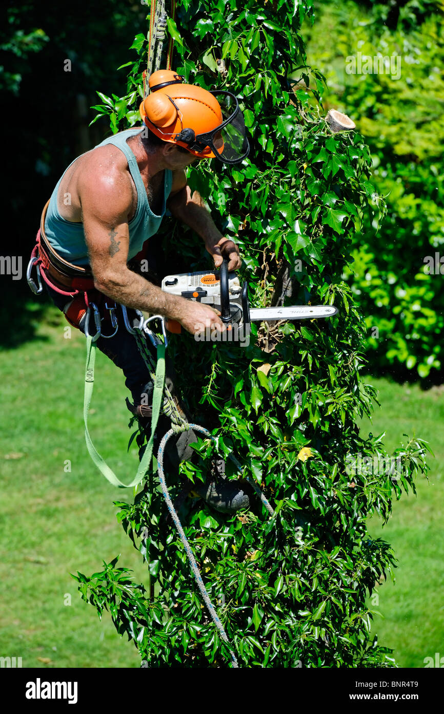 Tree Surgeon - Stock Image