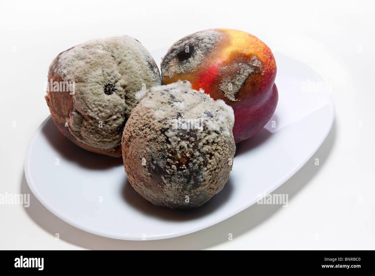 Rotten old nectarines covered with green fungus mould. - Stock Image