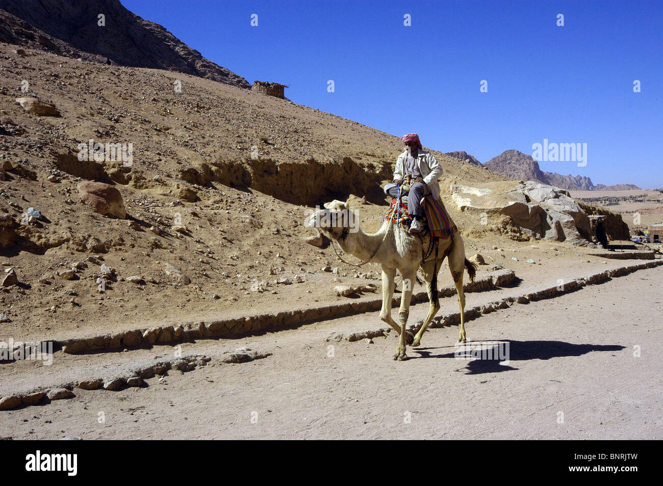 The ship of the desert, A Bedouin and his camel on the desert road close to The Monastery of St Catherine in Sinai. Stock Photo