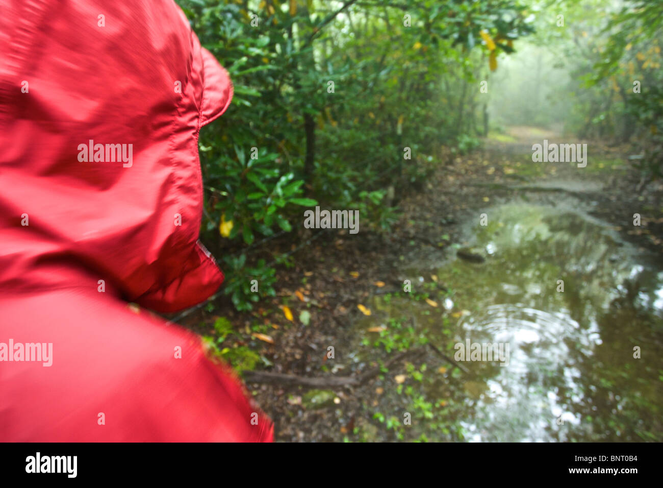A woman hikes on a rainy day in North Carolina. - Stock Image