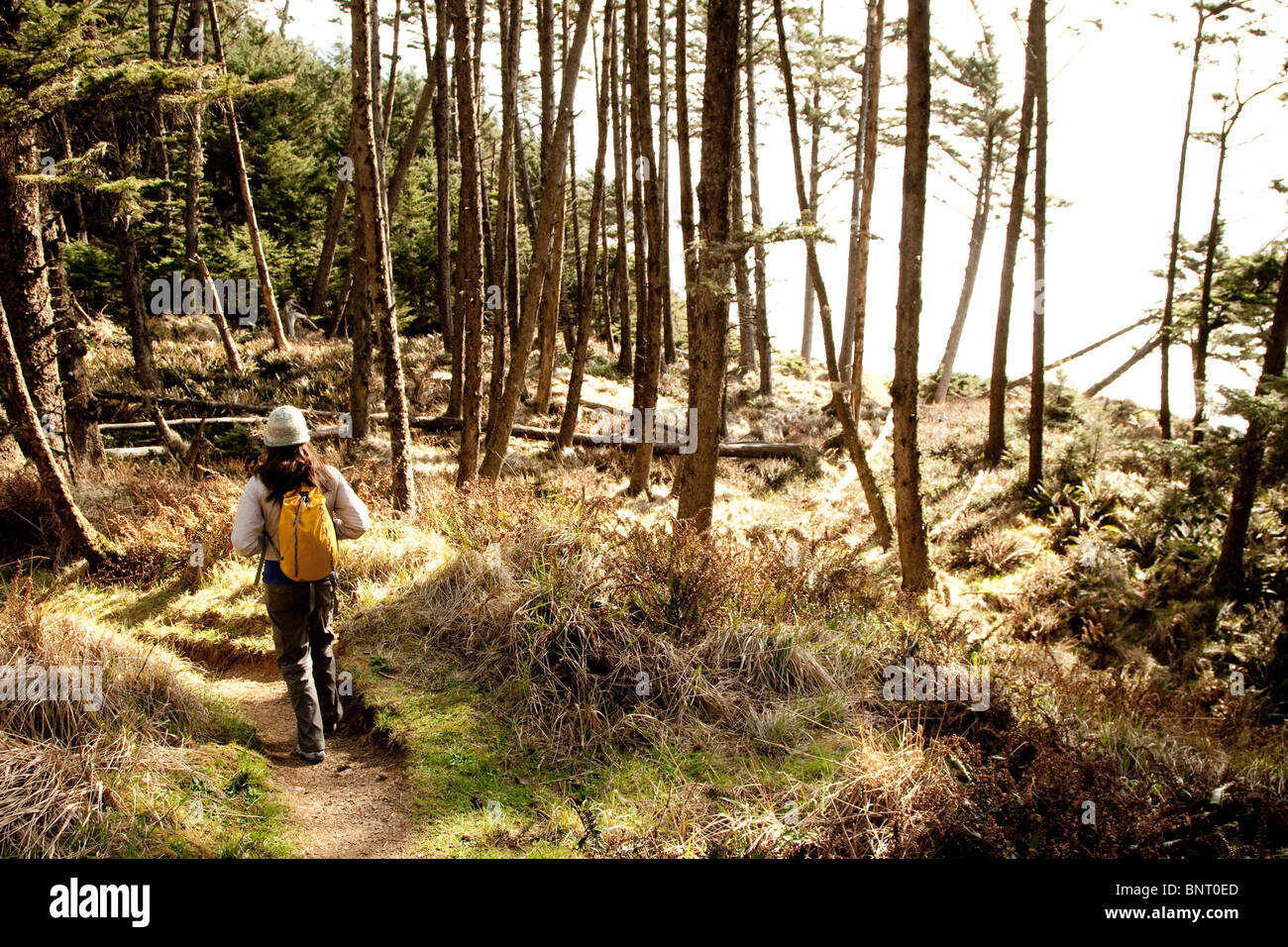 A woman hiking a secluded path through the trees. - Stock Image