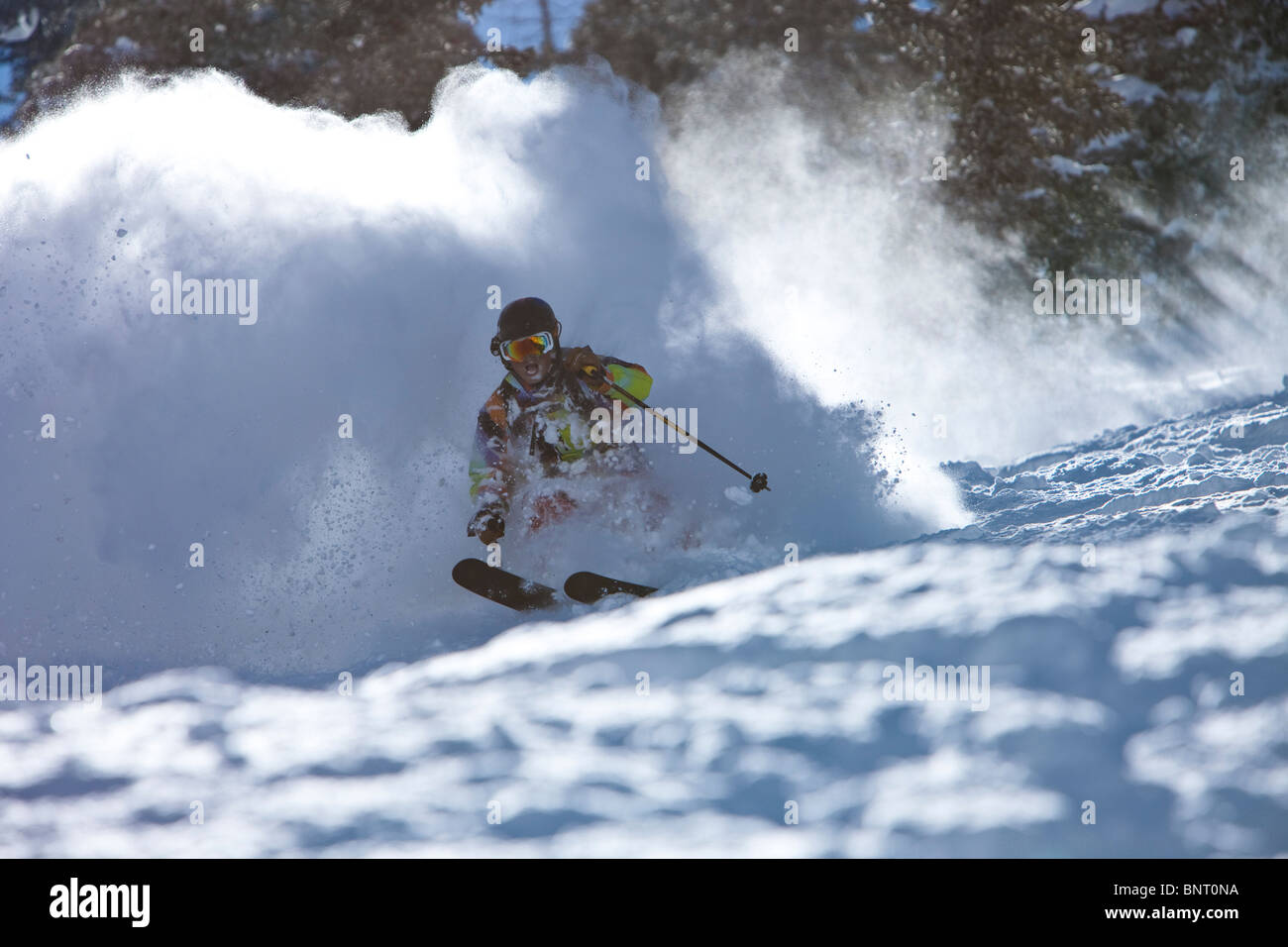 Male skier charges untracked powder on a sunny day in Utah. - Stock Image