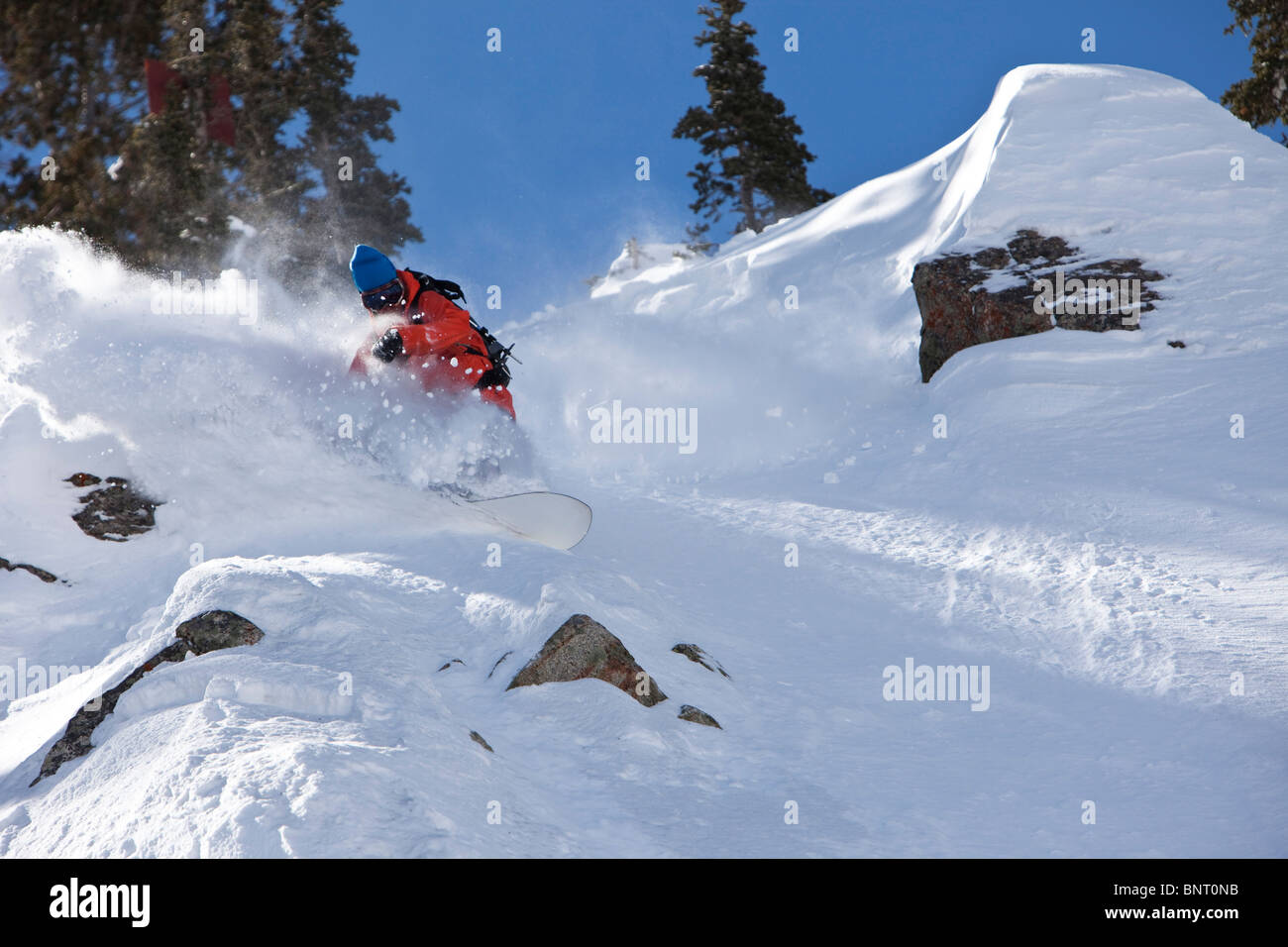 Male snowboarder charges untracked powder on a sunny day in Utah. - Stock Image