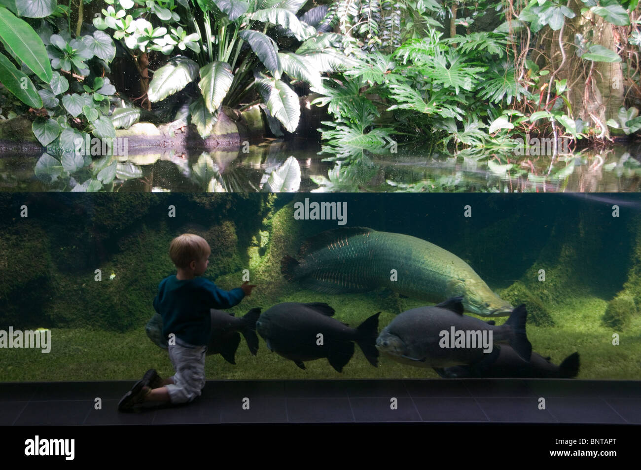 A Young Boy In Front At The Aquarium In The Berlin Zoological Garden  Zoologischer Garten,