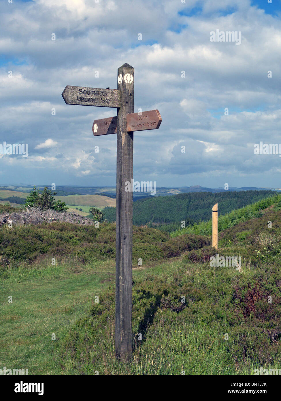 Wooden Fingerpost giving various Public Rights of Way part way up The Three Brethren Hill in the Tweed Valley Forest - Stock Image