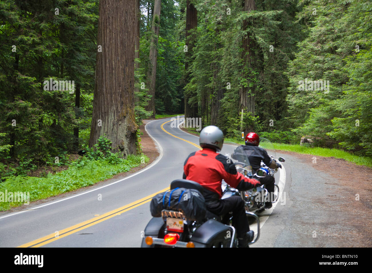Motorcycle riders in Redwood trees in Humbolt Redwoods State Park in Northern California - Stock Image