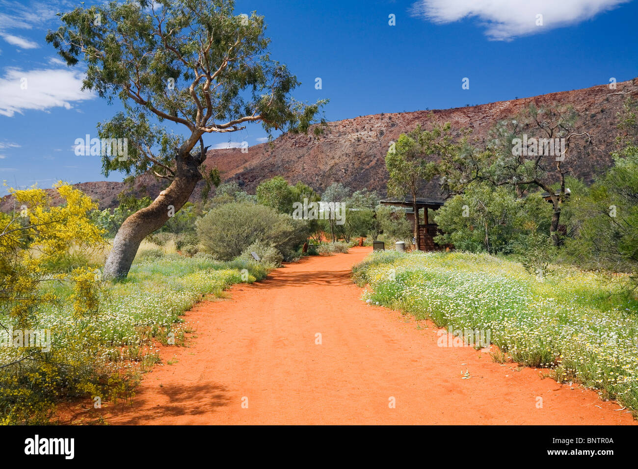 Alice Springs Desert Park.  Alice Springs, Northern Territory, AUSTRALIA. - Stock Image