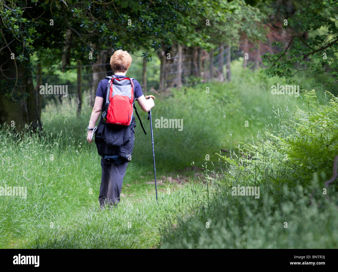 A female rambler/hiker walking along a grass track through a field in the Brecon Beacons, Wales, UK - Stock Image