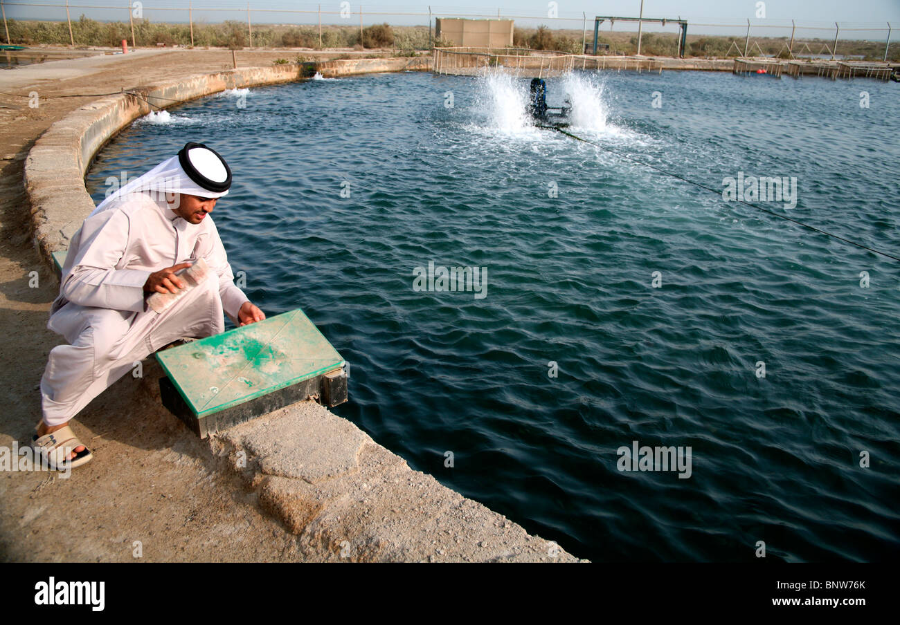 Umm Al Qawain Marine Research Centre Fish Breeding Tank Uae Stock Photo Alamy