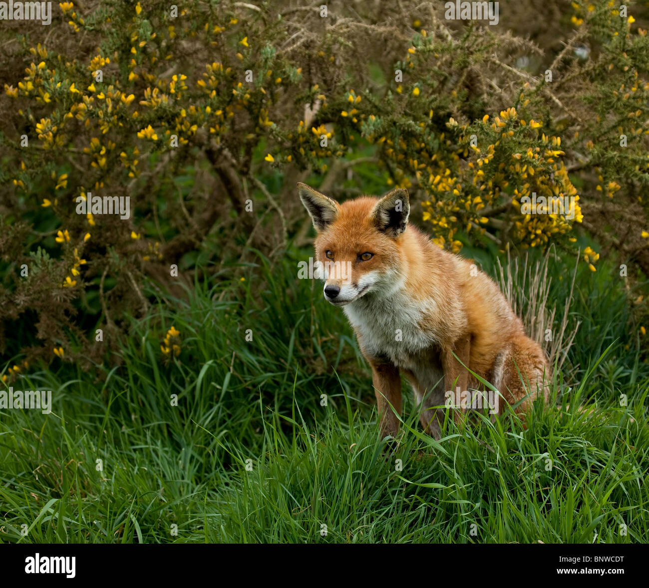 Royal George Hotel Birdlip Gloucestershire: Snooty Fox Stock Photos & Snooty Fox Stock Images