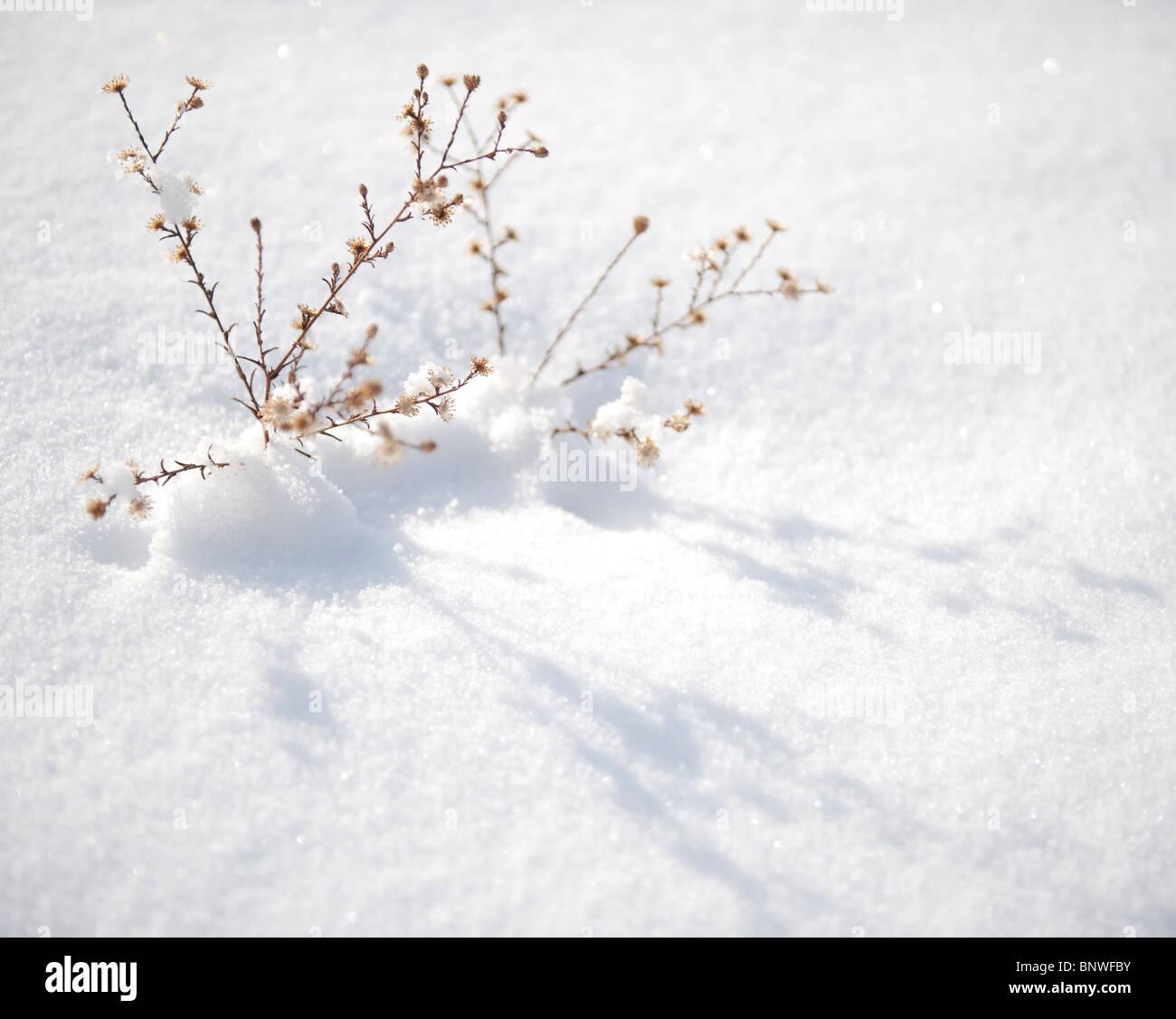 Macro of snow covered desert plants. Stock Photo
