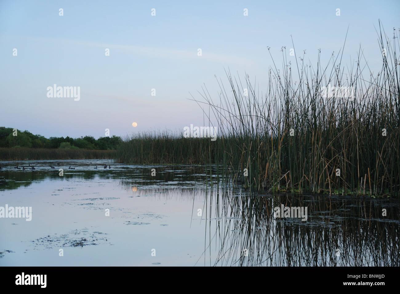 Lake at moonrise, Fennessey Ranch, Refugio, Corpus Christi, Coastal Bend, Texas Coast, USA - Stock Image