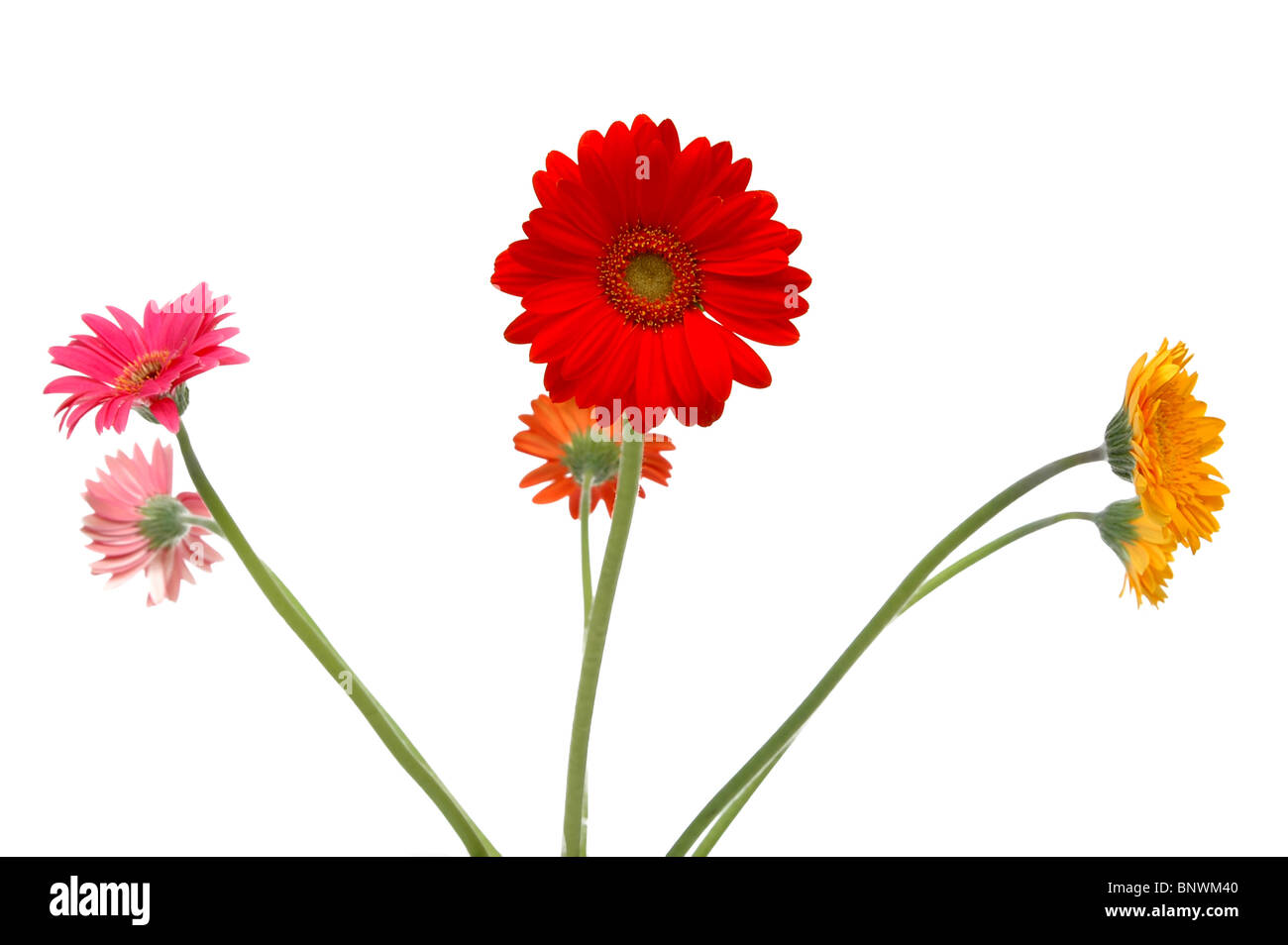 Beautiful Orange Yellow Daisy Flowers Stock Photos Beautiful