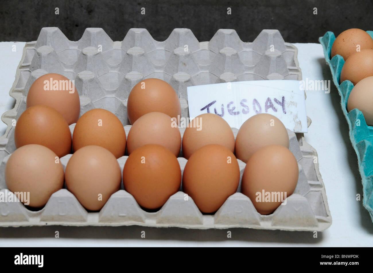Eggs in Carton - Stock Image