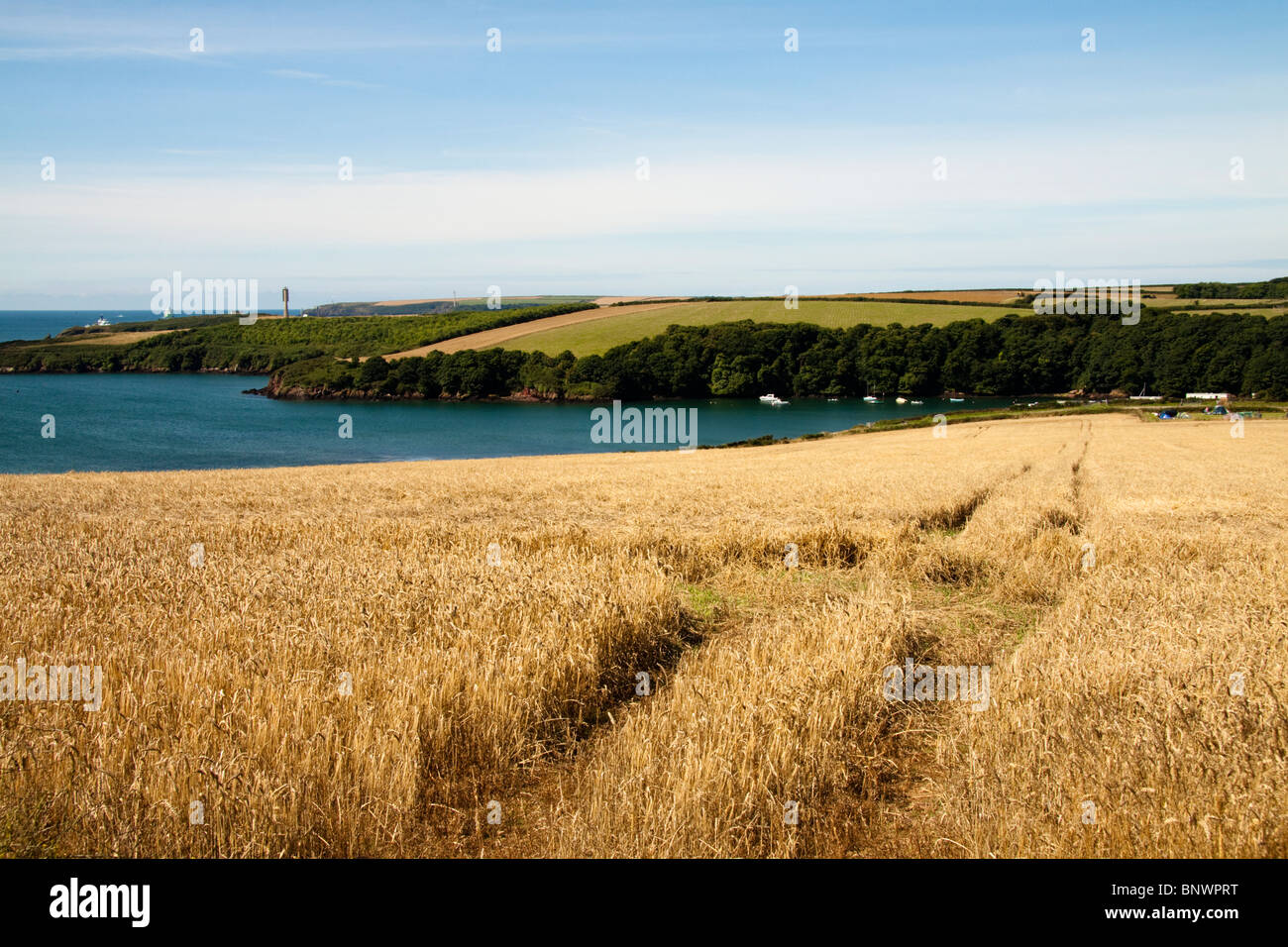 View of a wheat field overlooking Sandy Haven, Pembrokeshire, Wales, UK - Stock Image