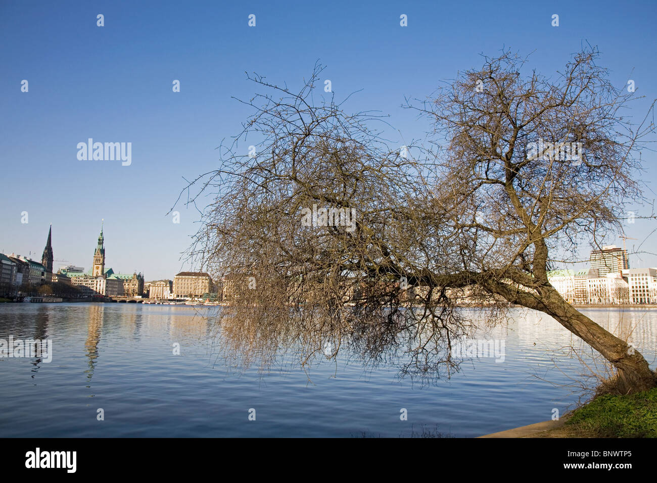 A willow tree leans over the Innen Alster Lake (Binnenalster) in the Neustadt District of Hamburg, Germany. - Stock Image