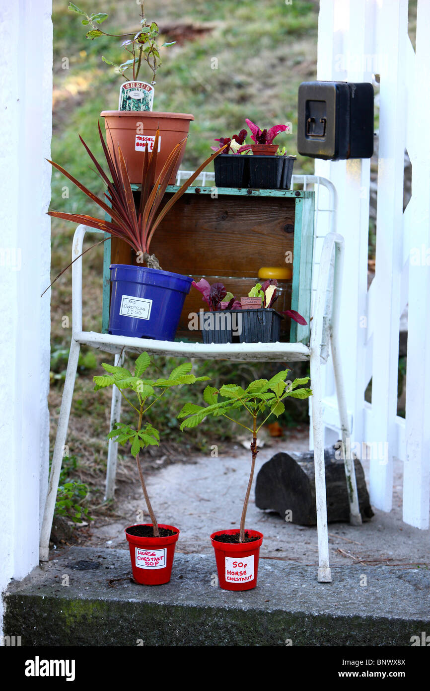 Garden sale, people offer plants and fruits of their own garden at the garden door, self service,  money in the - Stock Image
