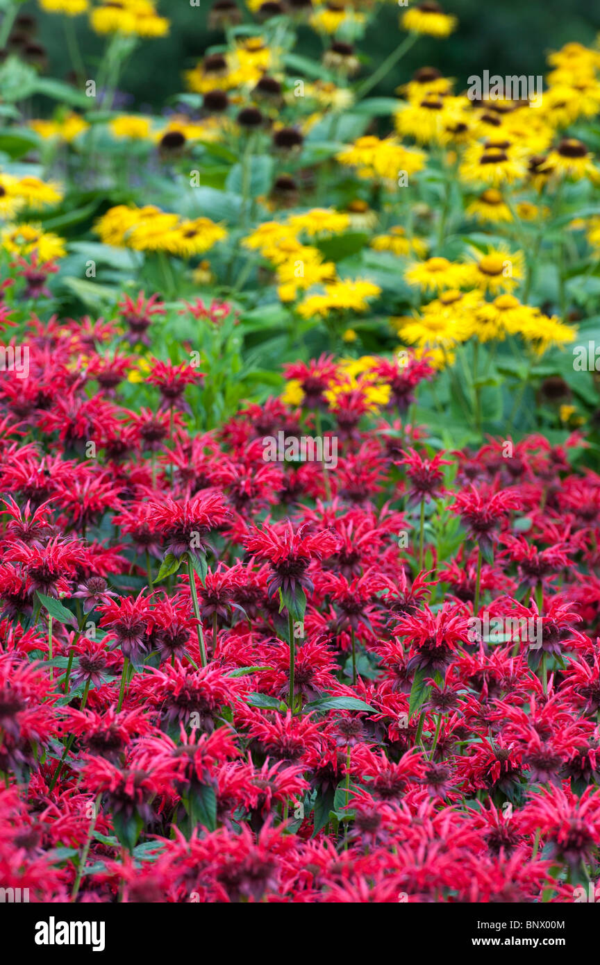 Monarda 'Gardenview Scarlet'. Bergamot 'Gardenview Scarlet' in an english garden flower border. - Stock Image