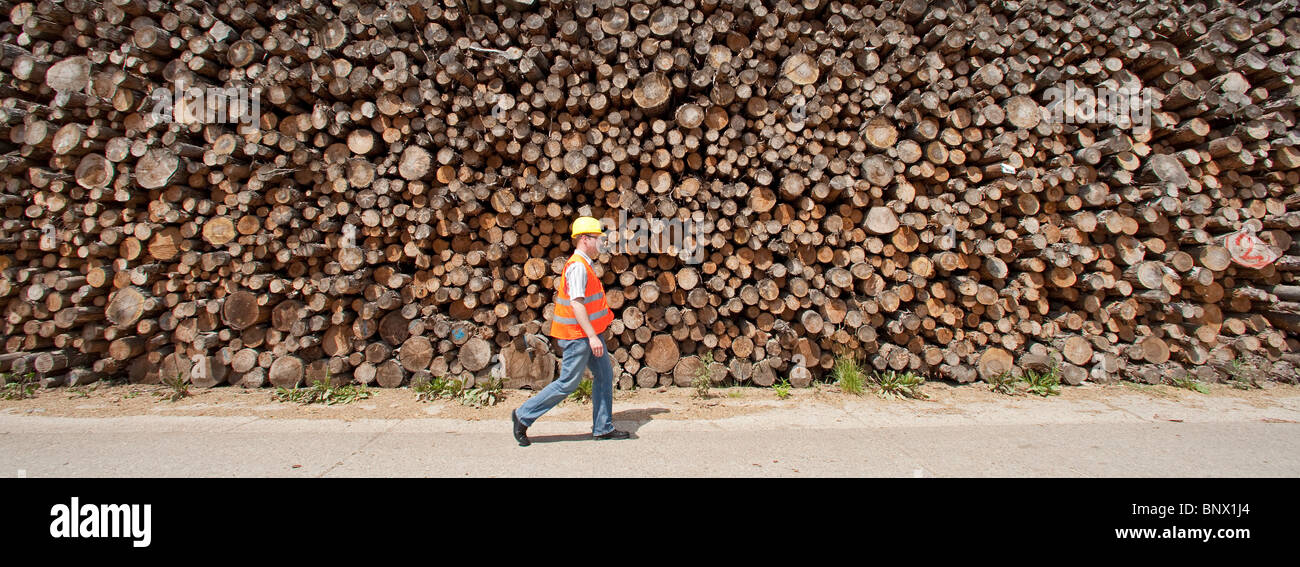 pfleiderer AG company, production site for chipboards, worker in protective clothing in front of piled up logs - Stock Image