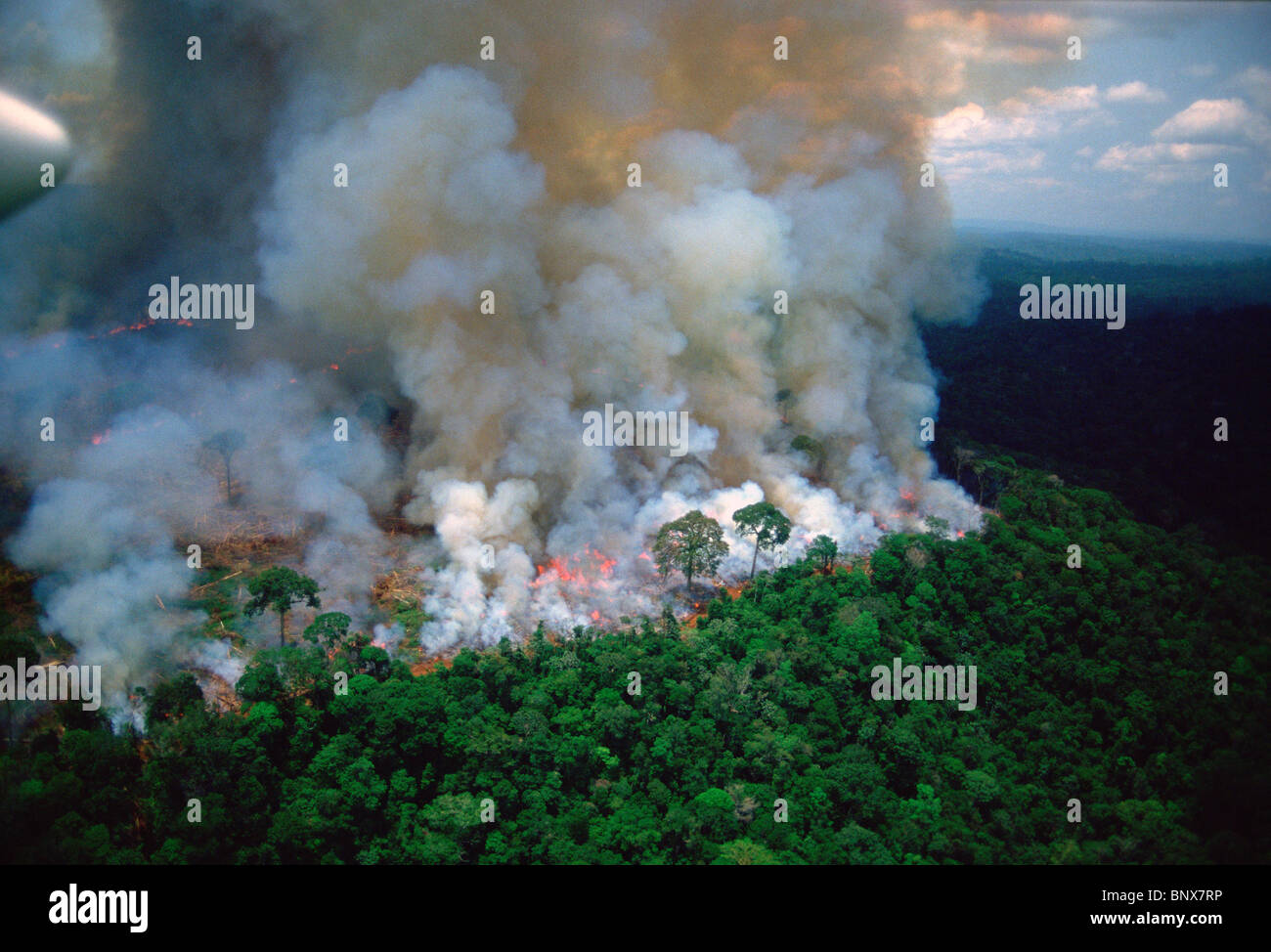 Amazon rain forest afire. Stock Photo