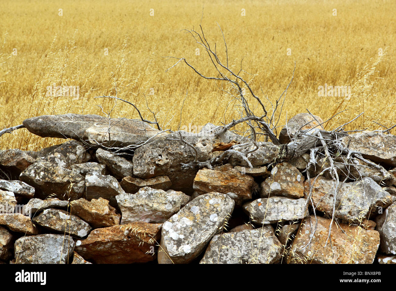 masonry stone wall golden summer field Formentera Balearic Islands - Stock Image
