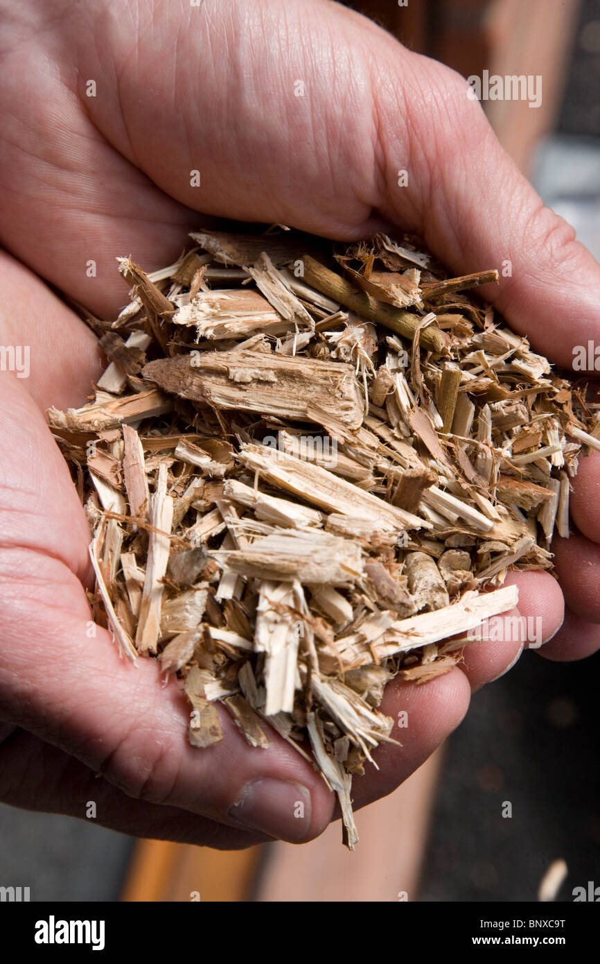 Willow Chips Used for fuel At Cottam Power Station, Nottinghamshire,England - Stock Image