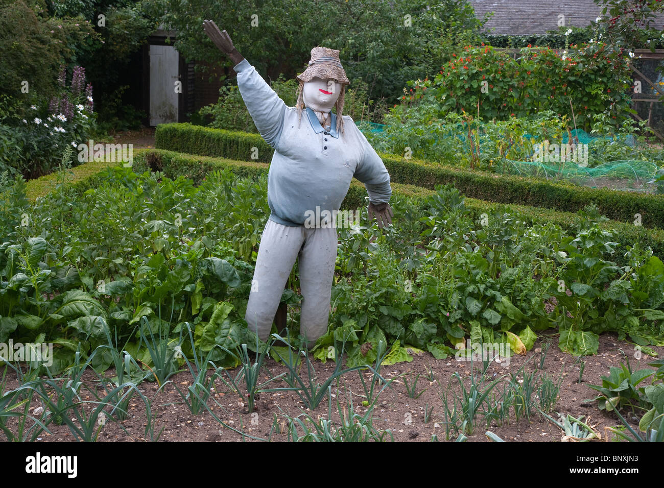Garden Scare Crow in vegetable patch - Stock Image