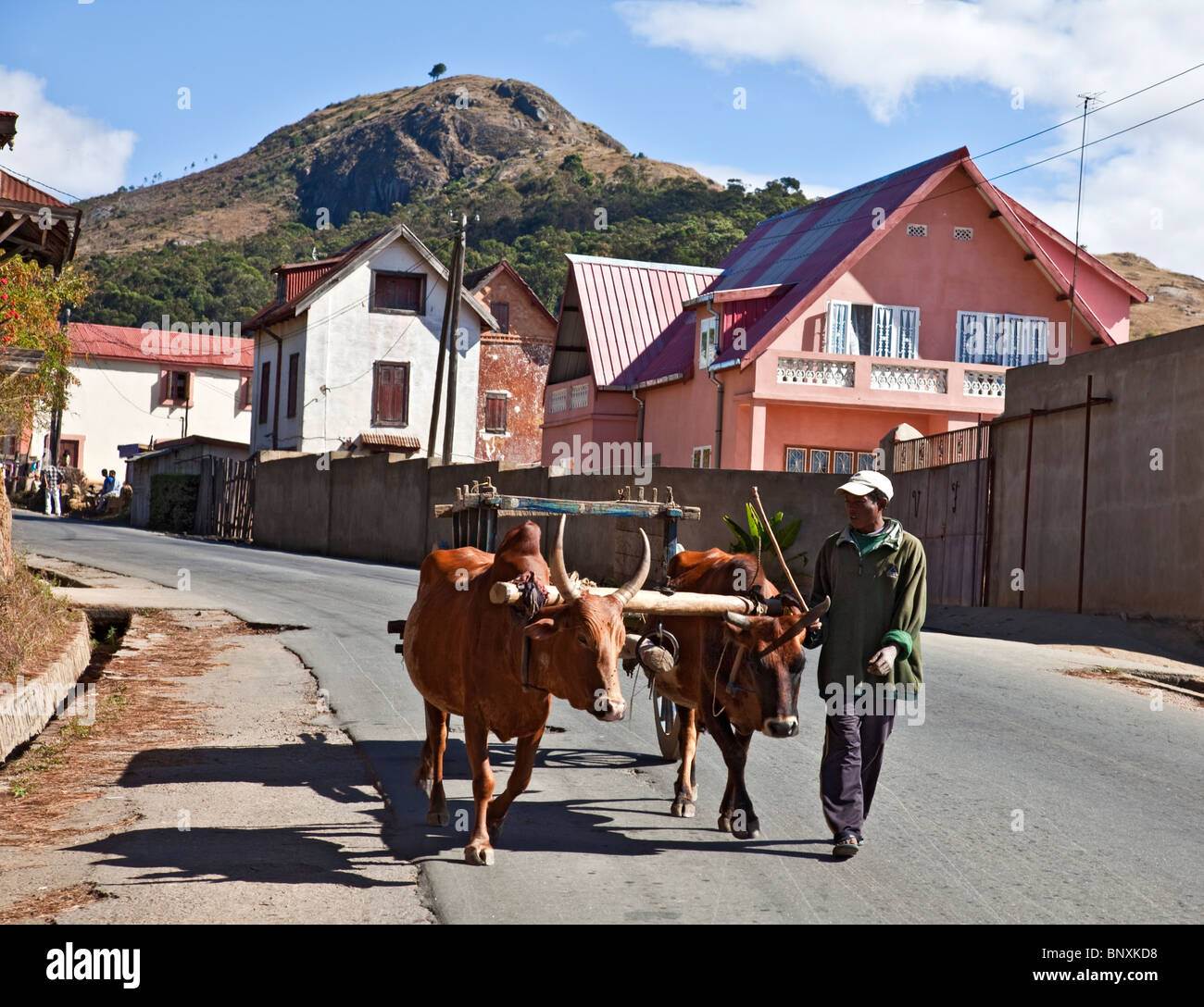 Man with a zebu cart in the central highlands of Madagascar - Stock Image